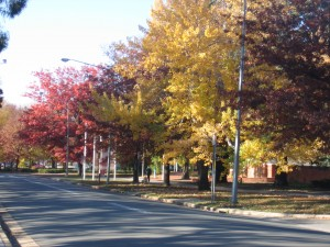 Canberra avenue in autumn