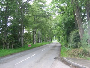 Avenue to Insch
